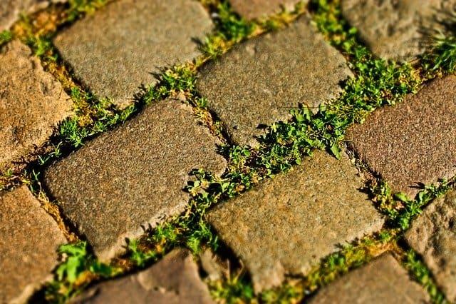 שטח אדמה עם דשא